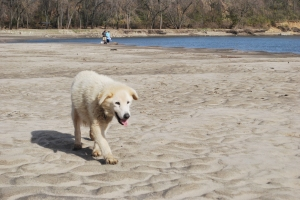 Snoopy along the Des Moines River at Yellow Banks Park.  He's missed.